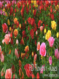 3DMentor HD Flowers vol 1 Roses