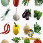 TurboSquid Collection of Vegetables