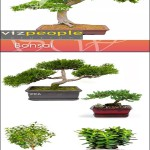 VizPeople Bonsai