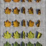 Autumn Leaves Pack 3D Studio Max 2012