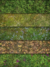 Ground and Grass texture