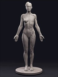 3DTotal Anatomical Collection Female Figure