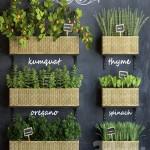 Kitchen garden 3