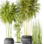 Bamboo and Equisetum
