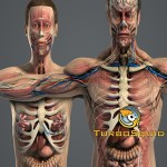 TurboSquid Male and Female Anatomy Complete Pack (Textured)