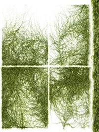 Leaves for walls v3