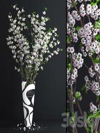 Cherry White Blossom