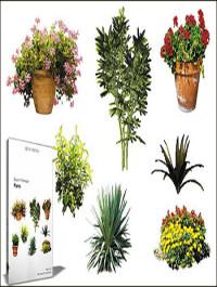 DOSCH DESIGN 2D Viz-Images Plants