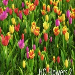HD Flowers vol.2 for Cinema4D