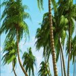 HQ Palms vol.1 for Cinema4D