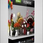 CGAxis Models Volume 6 Flowers