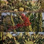 Maxtree Plant Models Vol 17