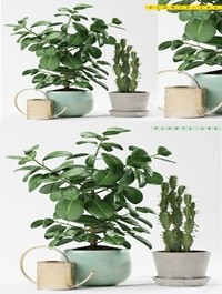 PLANTS 186