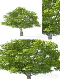 Tilia Tree 10m Height Tree Set 01