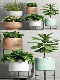 Plant Set 81