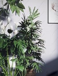 Plant Set 88