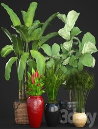 Collection of plants 75