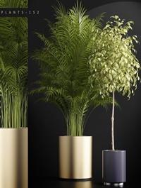 Plants set 152 3D model