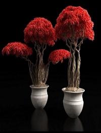 Red bonsai plants 3D model