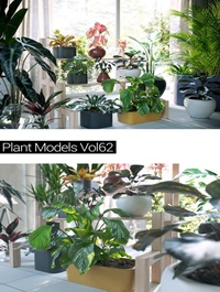 MAXTREE Plant Models Vol 62