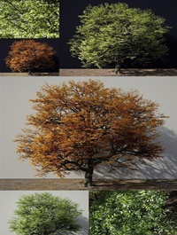 A Tree In Green And Autumn Colours