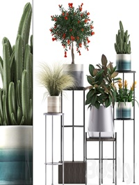 Plant collection 287
