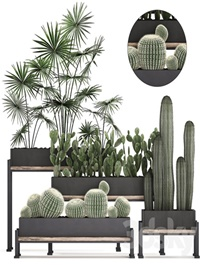 Plant Collection 462