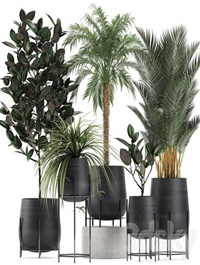 Plant Collection 627
