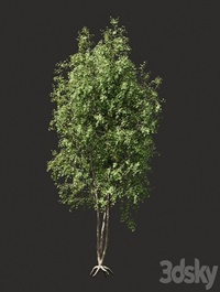 Summer ,tree, 03