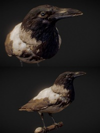 The Crow – Scanned 3D Model