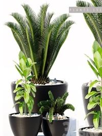 PLANTS 151 3d Model