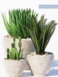 Plants set 150 3D Model