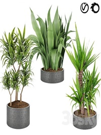Collection plant vol 6