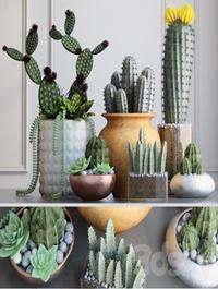 Set with Cactuses 3d Models