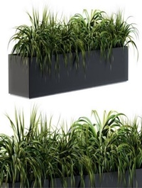 Ranch Grass plants in box