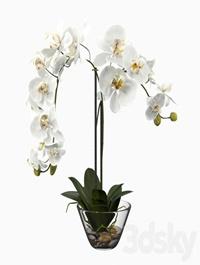 Phalaenopsis Silk White Orchid in Glass Vase