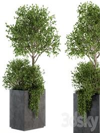Outdoor Plants in Concrete Plant Box - Set 93