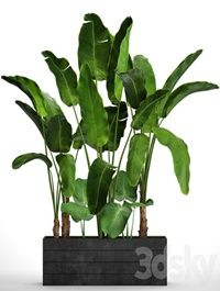 Collection of plants 73. Tropical plants