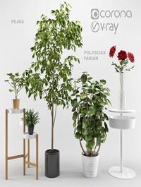 Ikea plants set