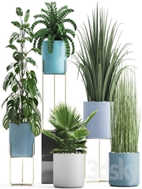 Plant collection 281