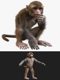 Monkey Fur Rigged model