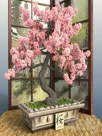Bonsai 1 - Sakura