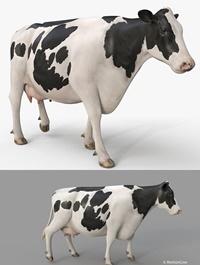 Turbosquid - Cow PRO Holstein